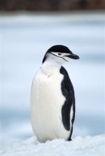 Antarctica photos 2 516